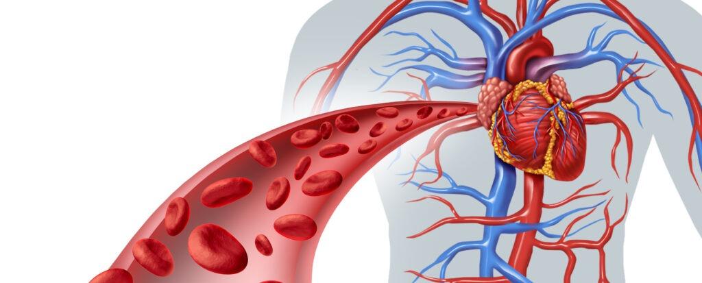 Расширение артерий снижается нагрузка на сердце