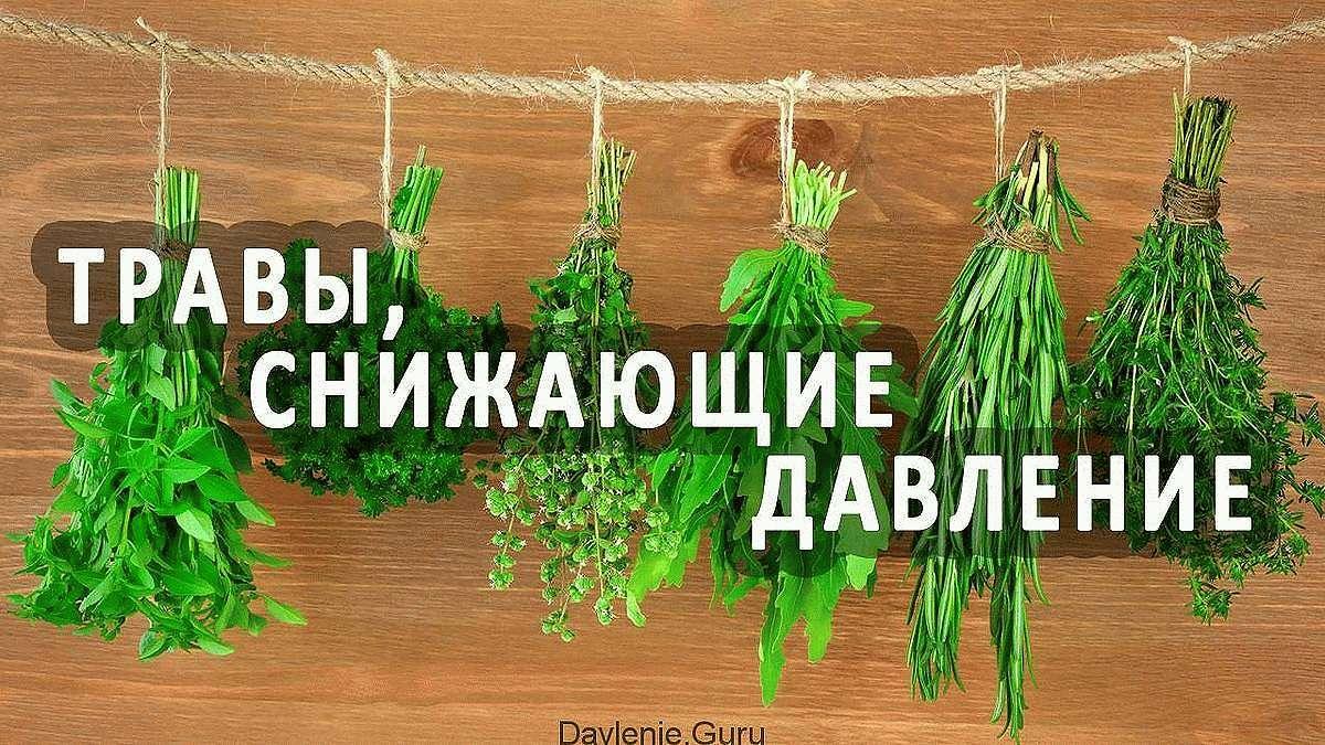 Травы понижающие давление и улучшающие работу сосудов