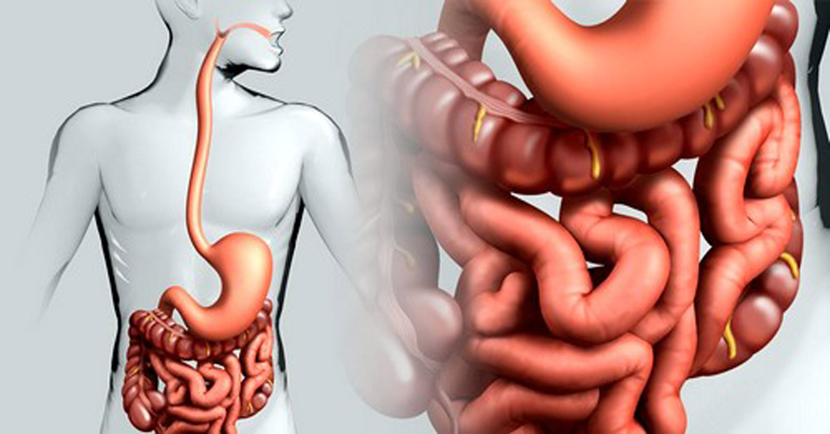Большая часть средства выводится через кишечник