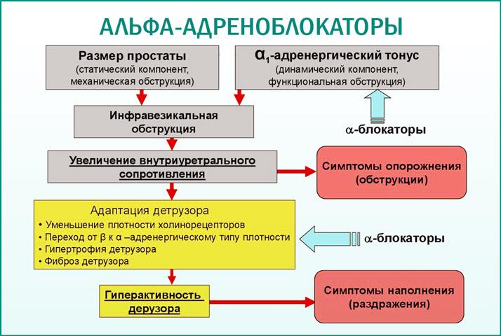 Альфа-адреноблокаторы
