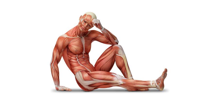 Нарушение в работе скелетных мышц