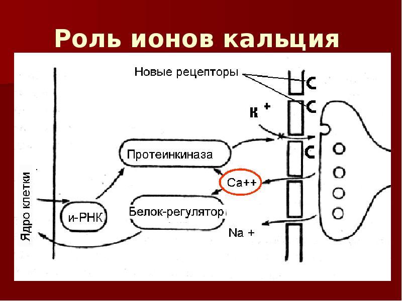 Кальциевые ионы