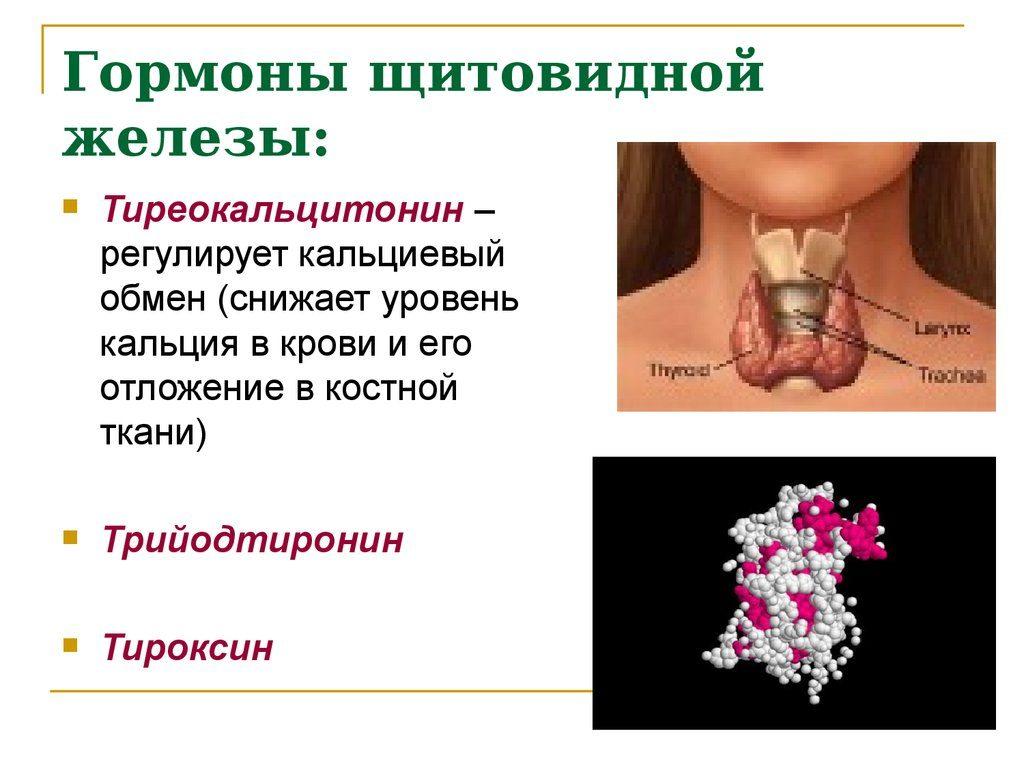 Гормоны щитовидки