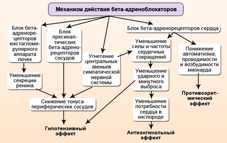 Блокаторы адренорецепторов