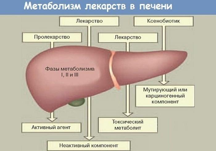 Метаболизм лекарств в печени