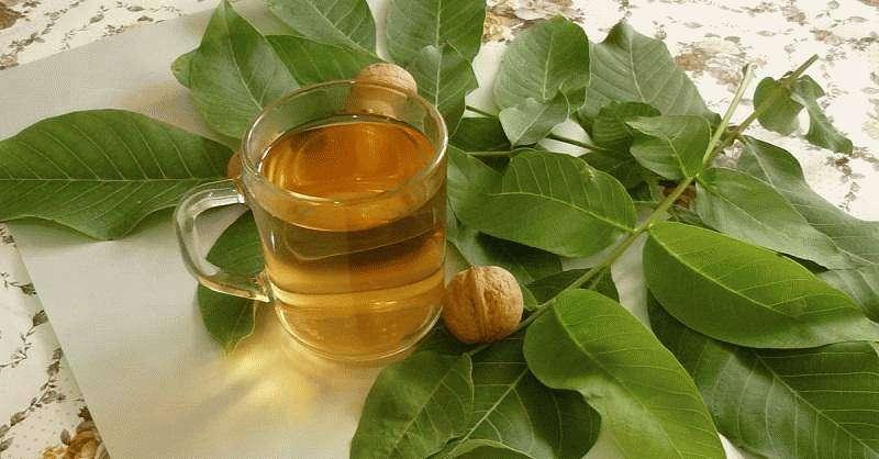 Листья ореха грецкого