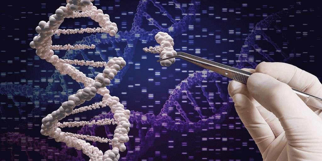 Генетическая детерминированность