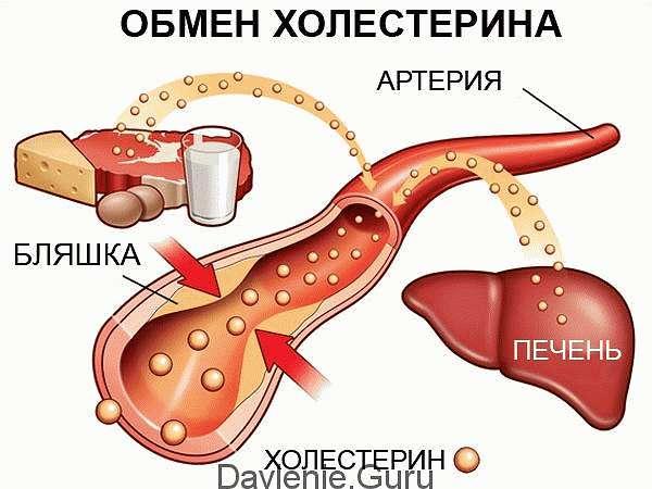 Холестерин и его значение для организма
