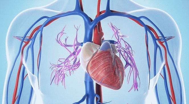 Заболевания сердечной мышцы