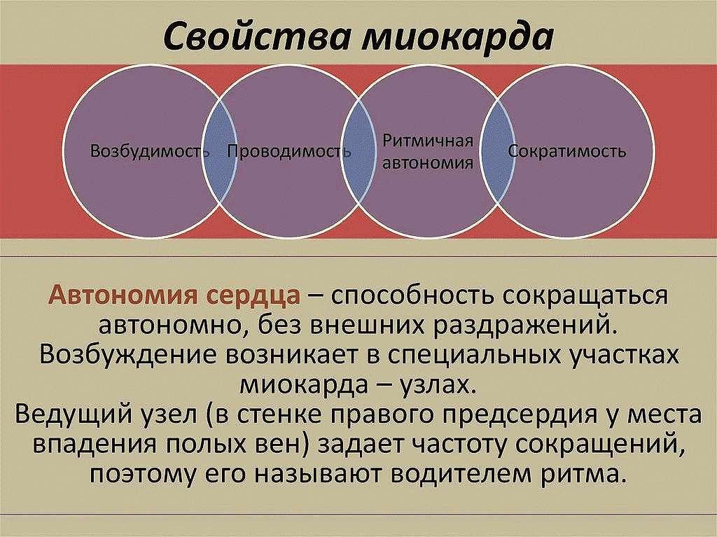 Свойства миокарда
