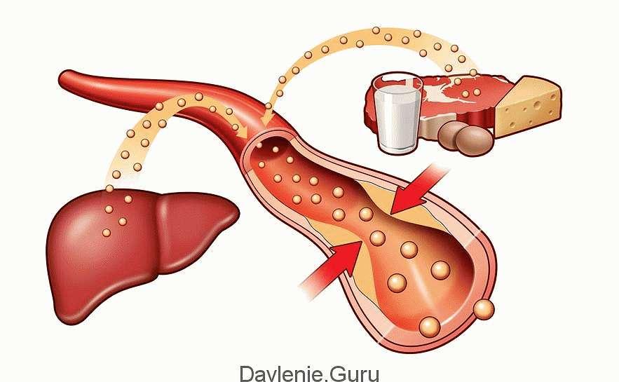 Важные биологические функции холестерина