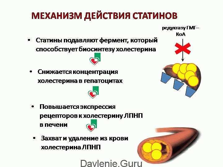 Механизм действия статинов