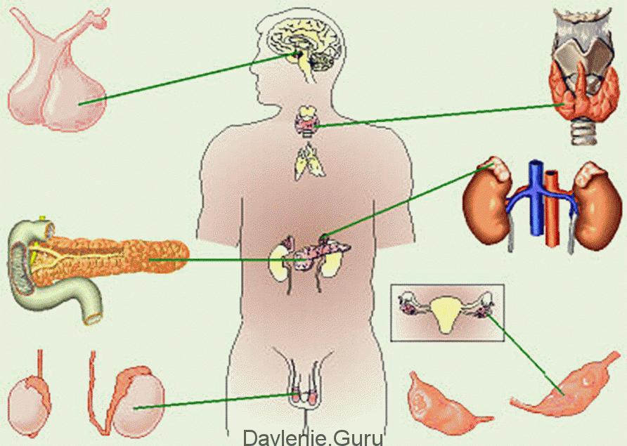 Эндокринные дисфункции