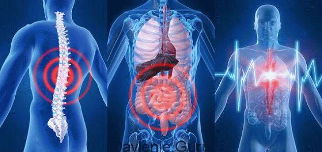 Группы органов