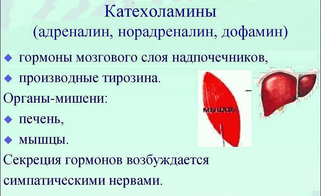 Катехоламин