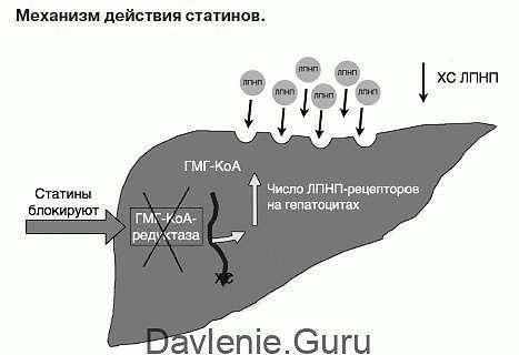 Действиестатинов