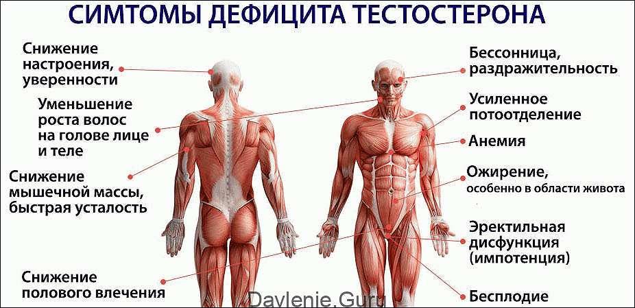 Связаны ли холестерин и тестостерон в организме у мужчин?