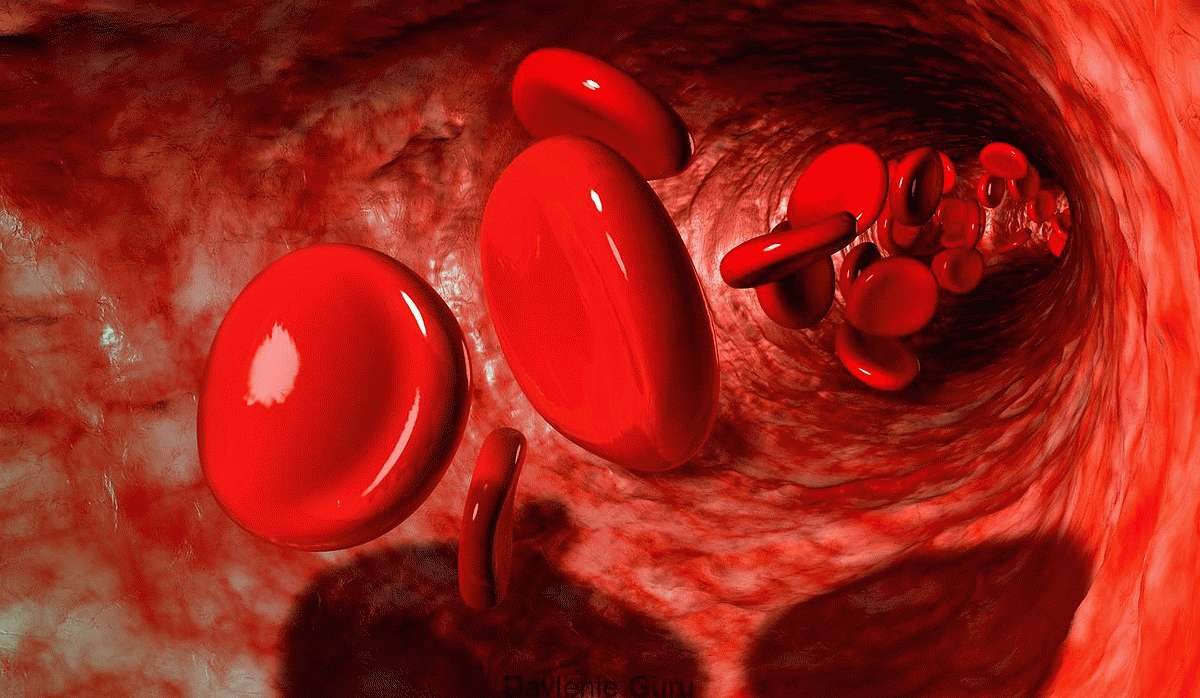 Восстанавливается работа кровеносной системы