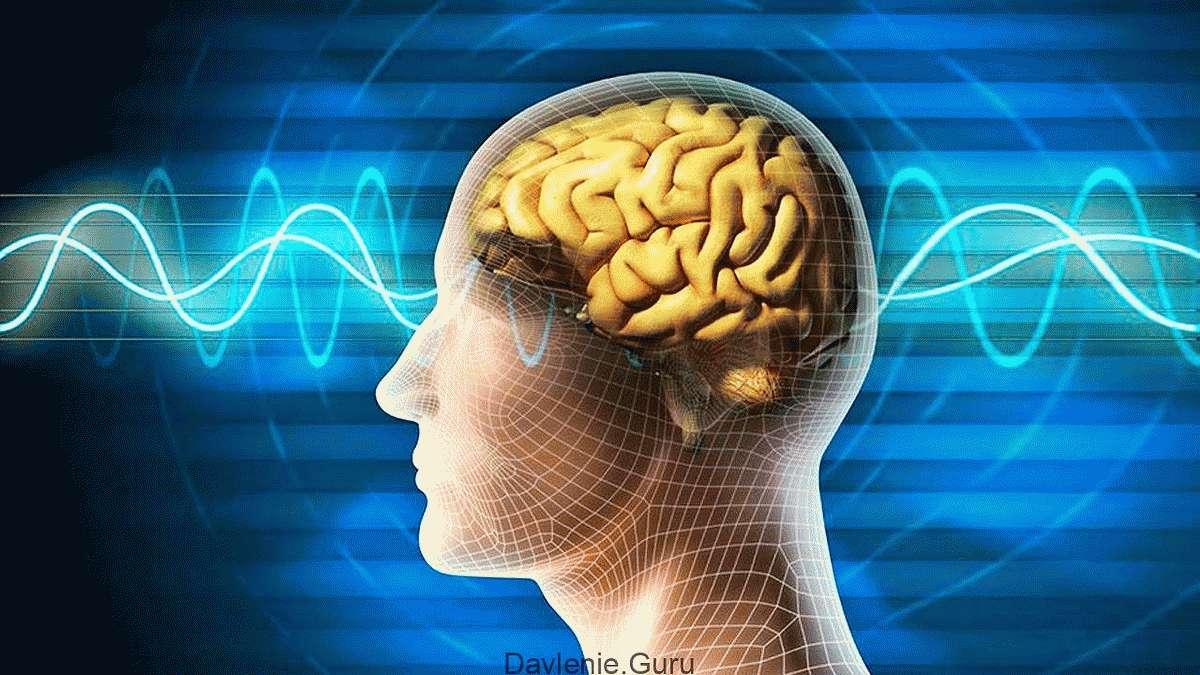 Улучшает работу мозга и функционирование нервной системы
