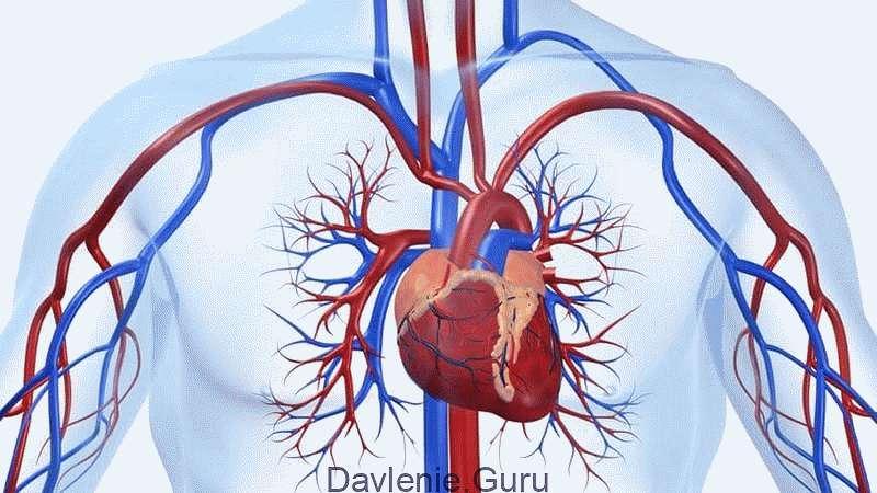 Снимает воспаления в сердечно-сосудистой системе