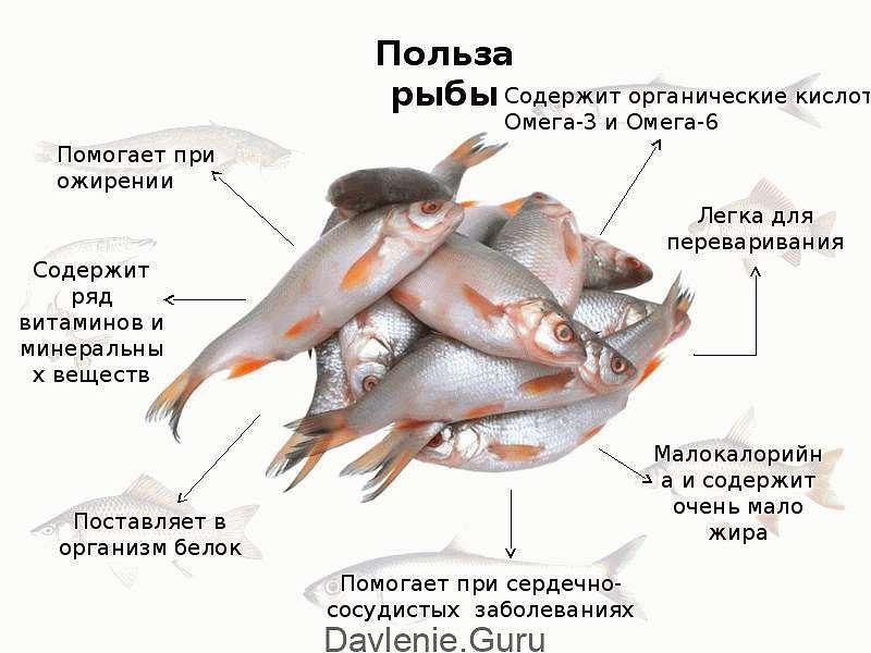 Полезность рыбы