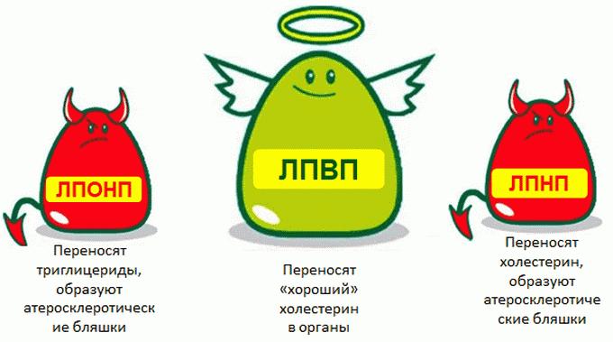 ЛПВП И ЛПНП