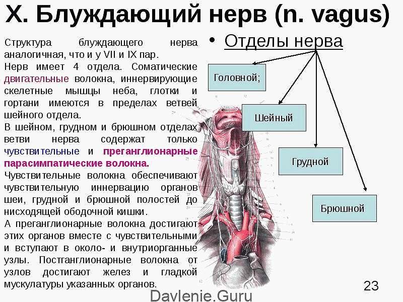 Снижение тонуса блуждающего нерва